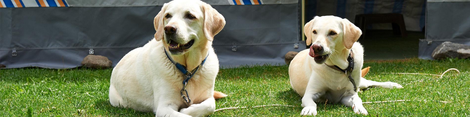 Domande Al Veterinario Cane vacanze in campeggio con il cane - tcs svizzero